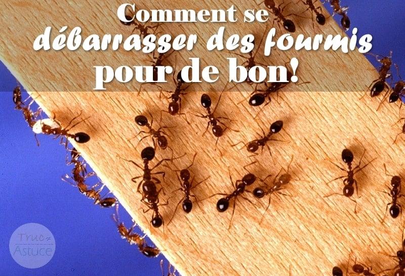 comment se débarrasser des fourmis